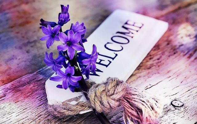 hyacinth-773384_640